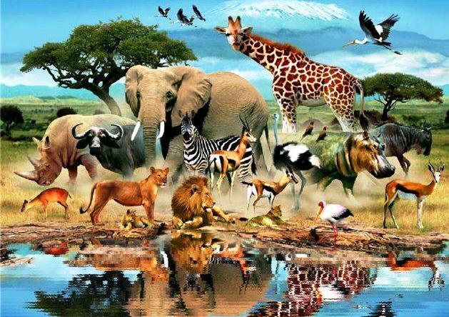 10 животных, вымерших за последние 10 лет