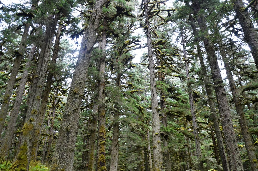 Паломничество на остров Еловый к месту молитвенного подвига и блаженной кончины прп. Германа Аляскинского