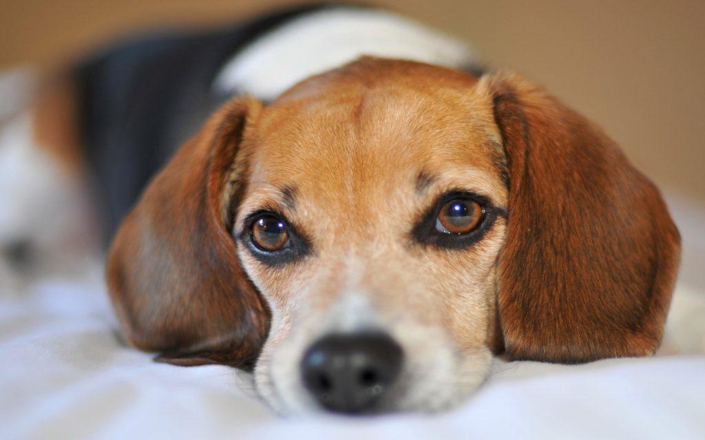 Год страдающей, но верной человеку собаки