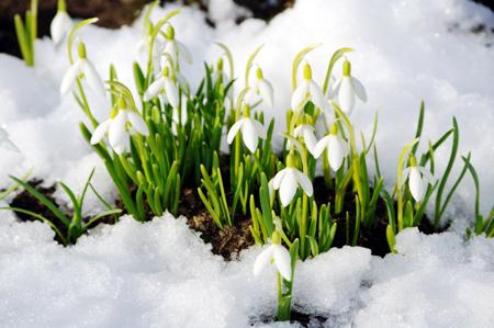 С первым днем календарной весны!