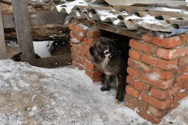 История собаки Жужи
