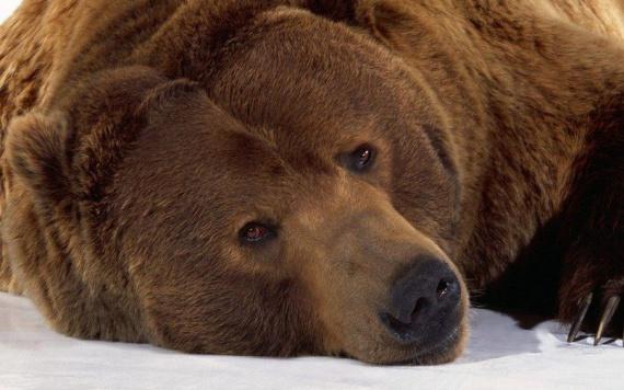 Как бурый медведь спас ссыльного митрополита