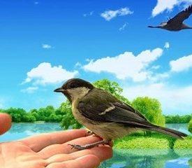 Международному дню птиц посвящается.О синичке и журавле