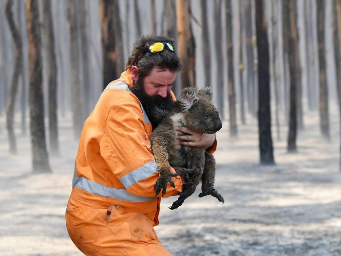 «Блажен, иже и скоты милует». Как в Австралии спасают животных