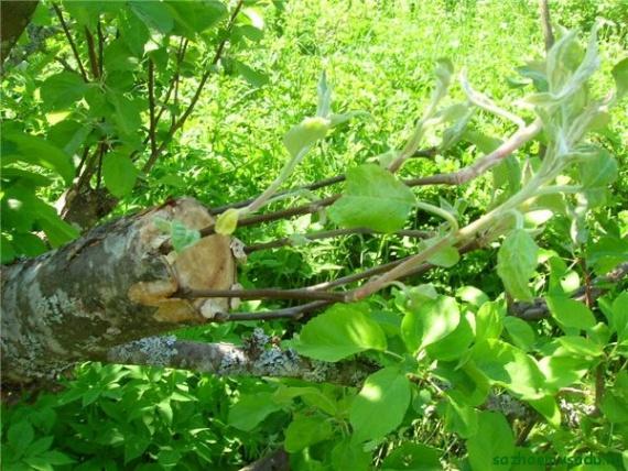 Щедрое дерево (притча)