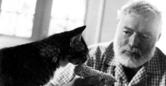 57 котов Хемингуэя. Всемирному дню кошек посвящается