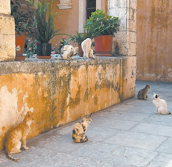 Знаете ли Вы о Кошачьем монастыре?