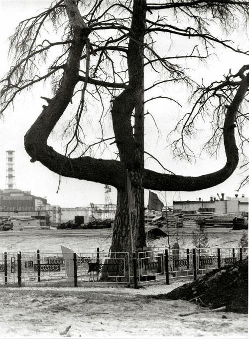Звезда Полынь.Чудеса и знамения в Чернобыле