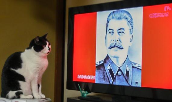 Гитлер кот сталин одним словом
